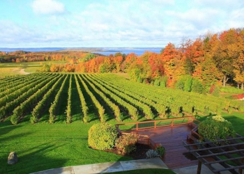 fall-vineyard-chateau-grand-traverse-cgtwines